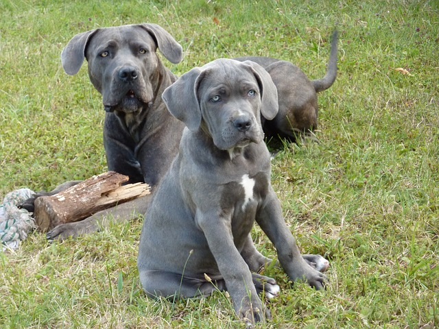 How To Find A Reputable Dog Breeder