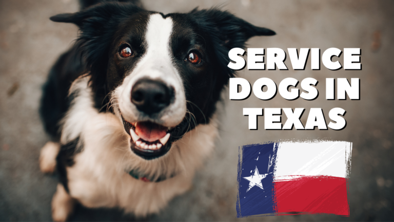 service dogs of texas