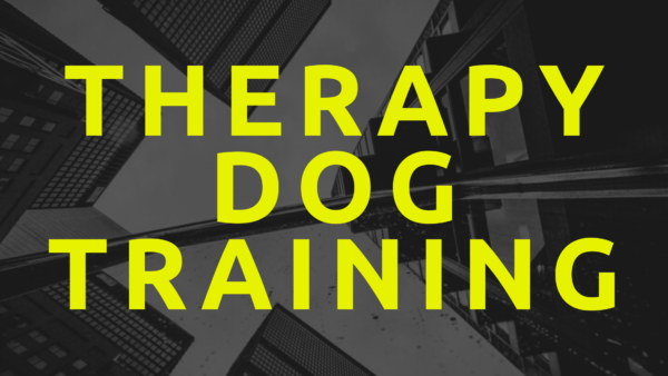 training a therapy dog