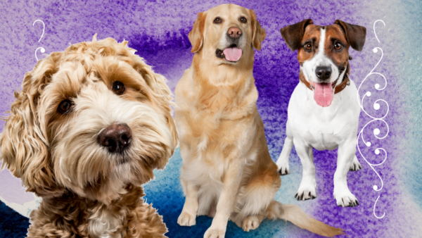 therapy dog benefits for humans