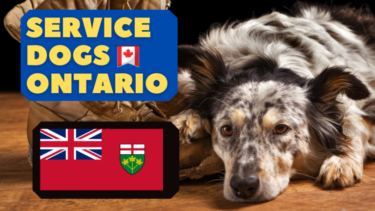 service dogs in ontario