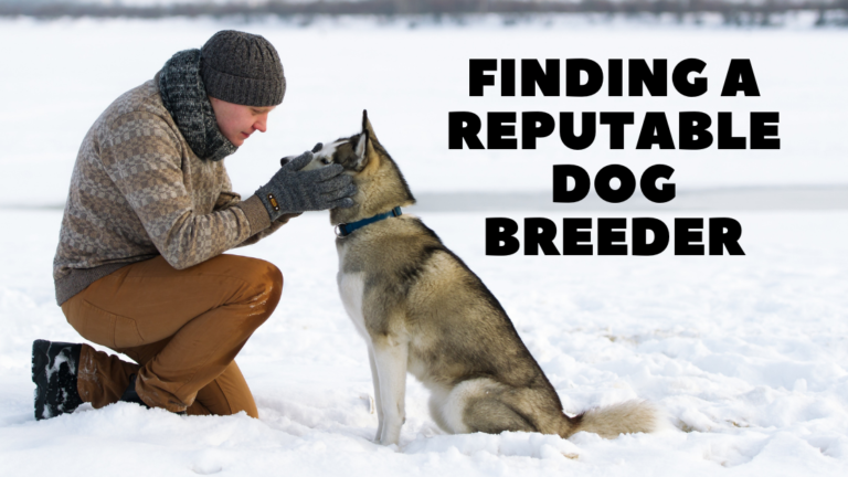 finding a reputable dog breeder