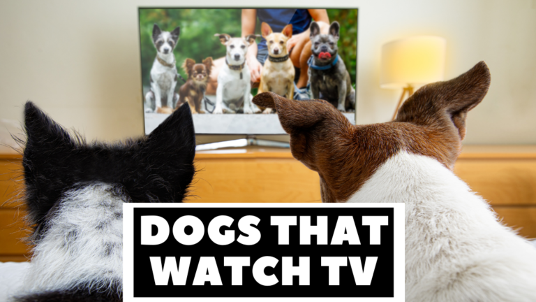 dogs that watch TV