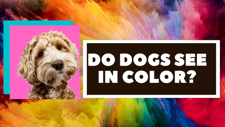 do dogs see in color