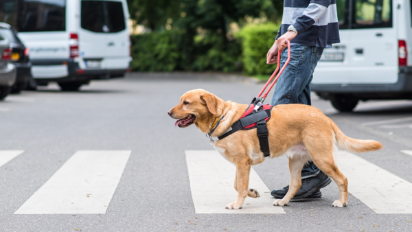 service animals helping people