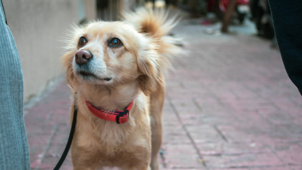 when can a service dog be excluded