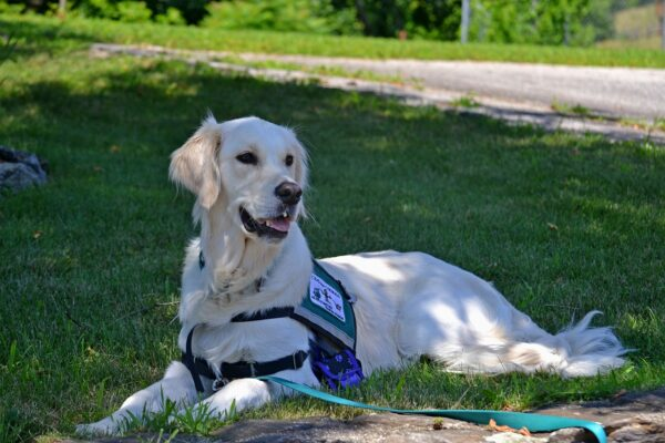 New York state service dog laws