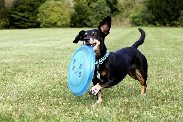 Frisbee with your dog
