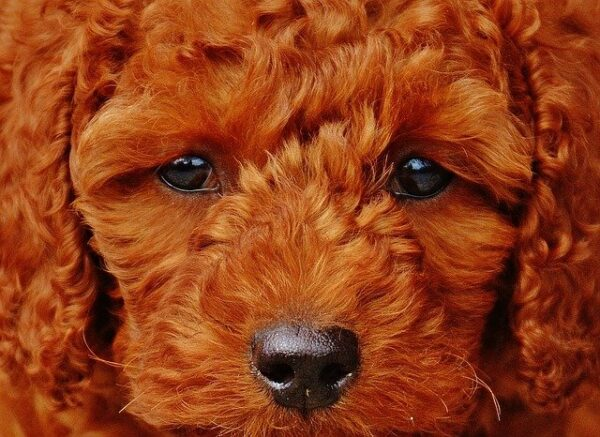 dog breeds that typically love people